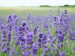 Growing-herbs