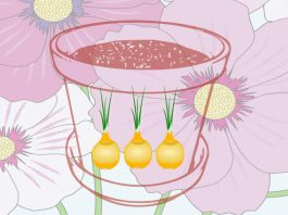 How-to-maximise-yields-in-an-edible-balcony-garden