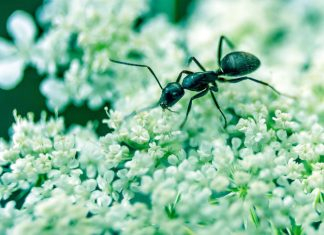 Natural-pesticides