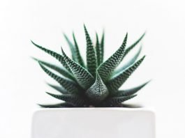 Care for your houseplants