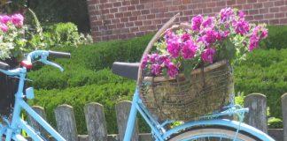 Recycling garden ideas